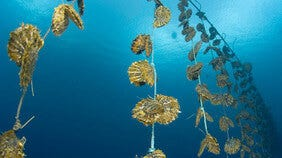 Perlenarten: Südsee, Tahiti, Akoya & Süßwasser | Brogle-Ratgeber
