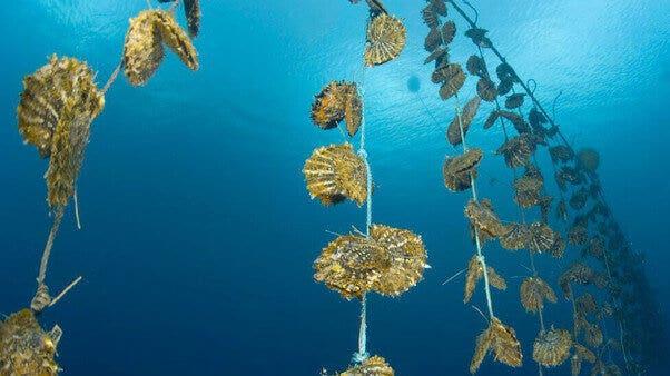 Perlenarten: Südsee, Tahiti, Akoya und Süßwasser